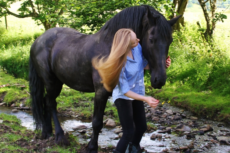 Padron, our Friesian horse, getting some love in the pasture, 5th July, 2016