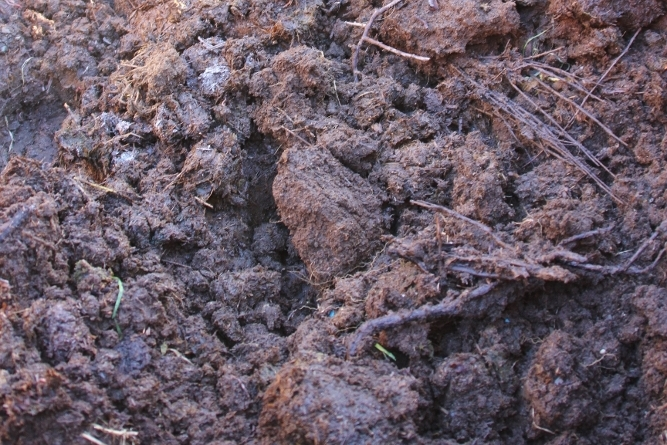 Free compost and horse manure from Llansilin, near Oswestry, Shropshire