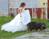 unusual wedding venues may have pigs