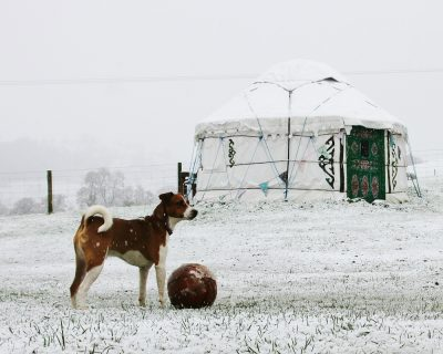 Winter glamping bring your dog