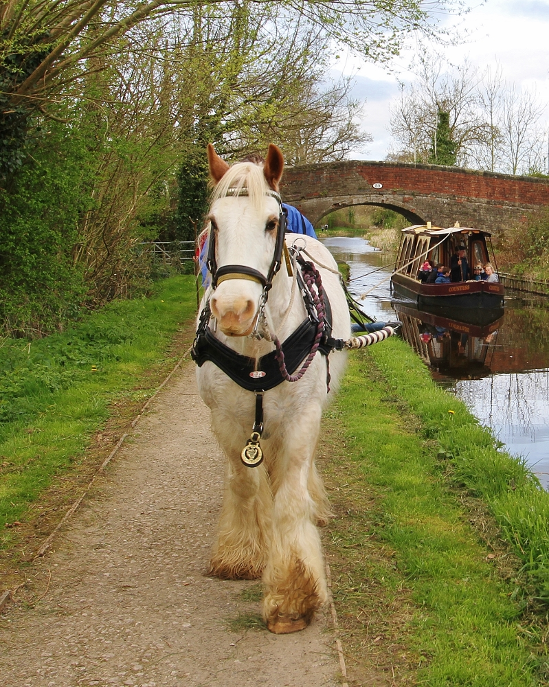 Horse drawn boat trip on single parent holidays at Barnutopia