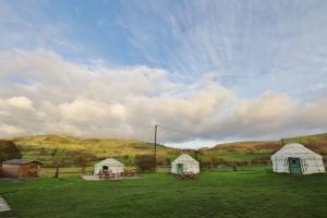 The yurt field