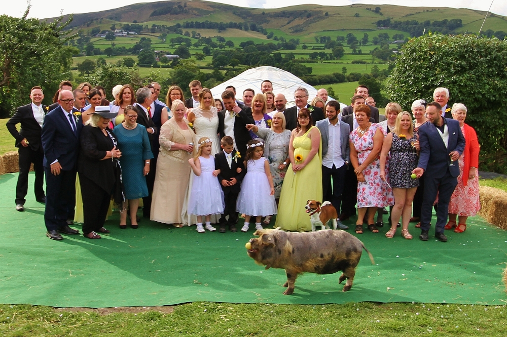 Piggy Felix joins the wedding party.