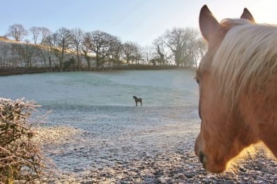 Barnutopia horses on the pasture in winter.