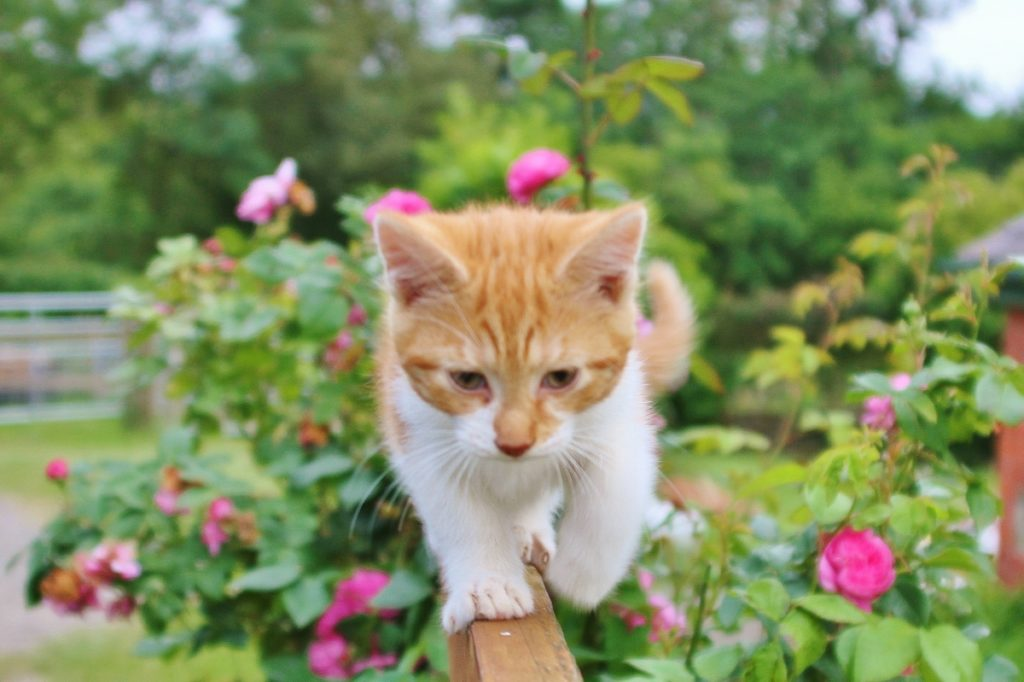 39 reasons: Snippet the ginger cat