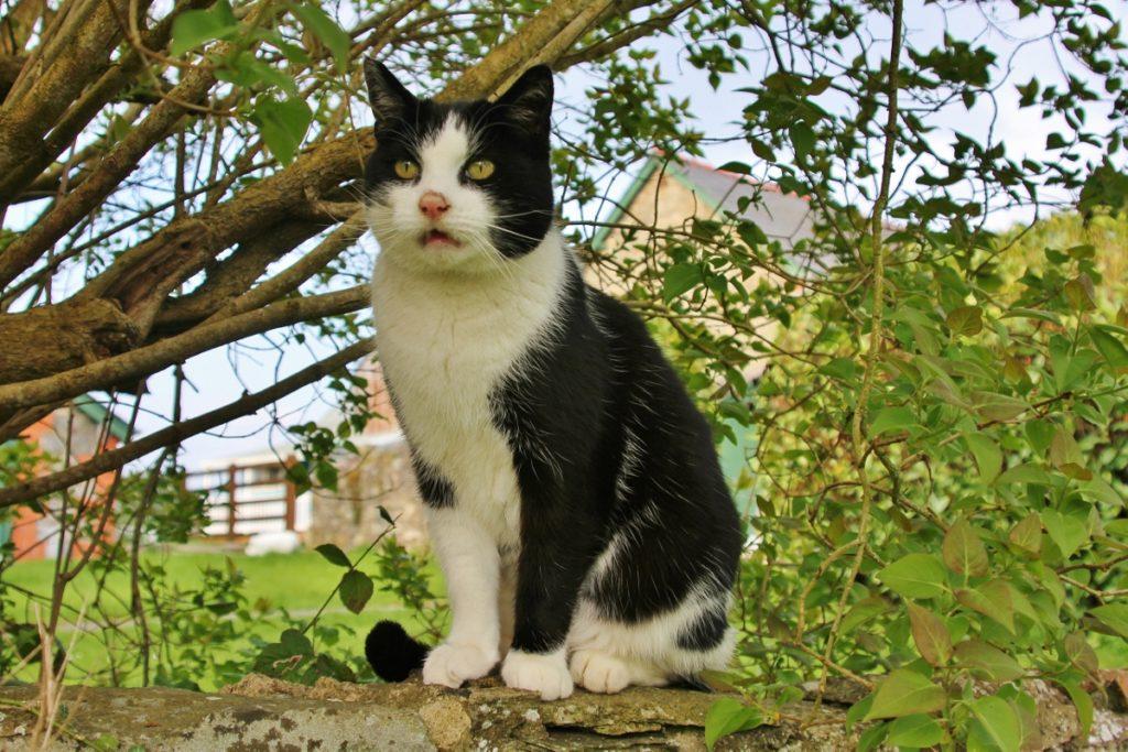 39 reasons: Oscar the boss cat