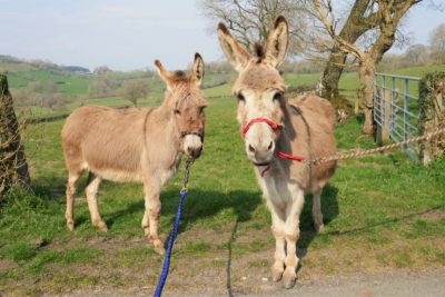 Donkeys to look forward to in 2020