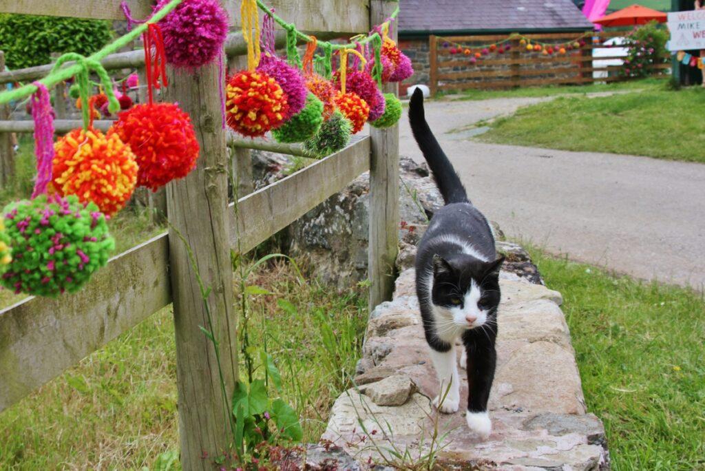 Oscar taking a stroll