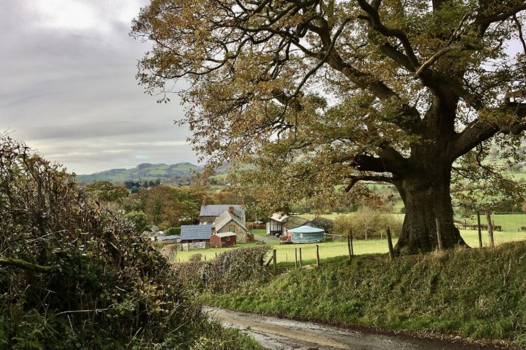 Autumn half-term glamping. Ther approach to Barnutopia.