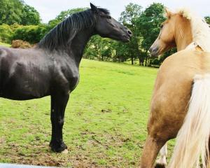 15_Horses_PadronSpirit (1000x800)